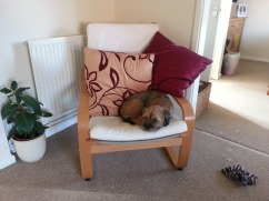 Dawg and the cushions